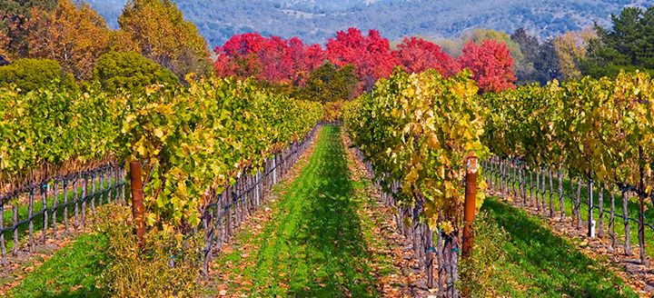sitemgr_Napa_Valley_Wineries_